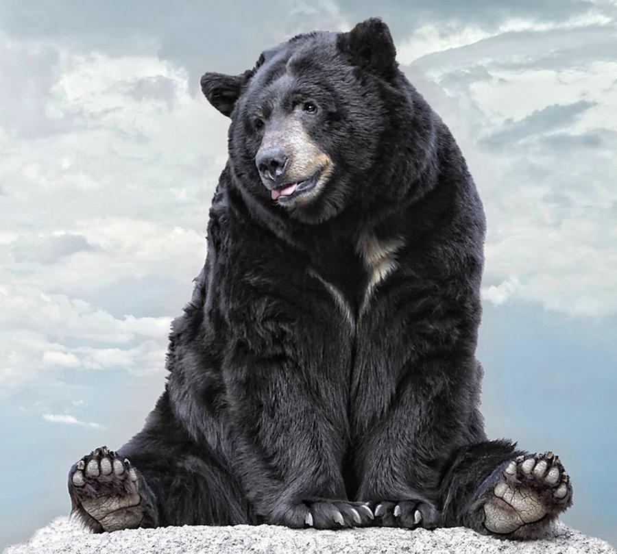 老虎杀熊 老虎和熊打架图片 父亲孩子背影高清图片