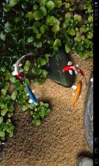 玩體育競技App|鲤鱼免費|APP試玩