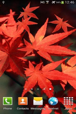 秋天生活壁纸 Autumn Live Wallpaper