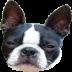 狗叫声 Dog Teaser 體育競技 LOGO-玩APPs